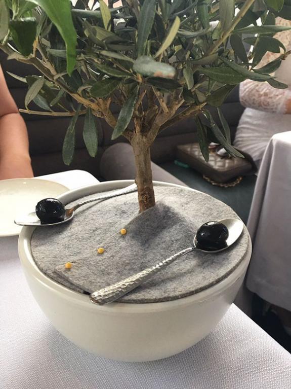 Olivy nejlépe chutnají servírované na lžičkách pod olivovníkem