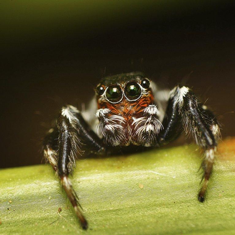 Nejkrásnější pavouci světa - Obrázek 13
