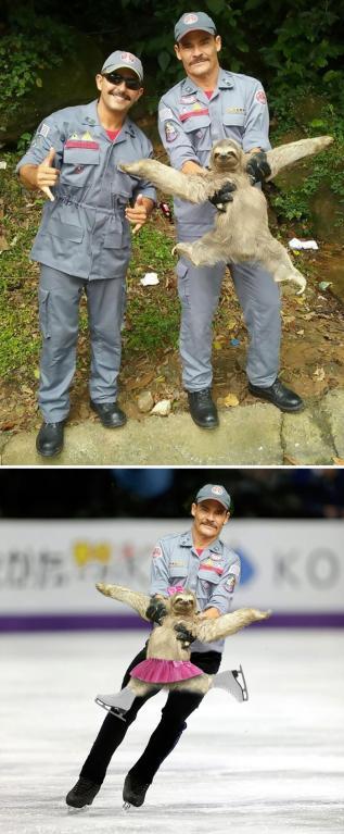 Zachráněný lenochod
