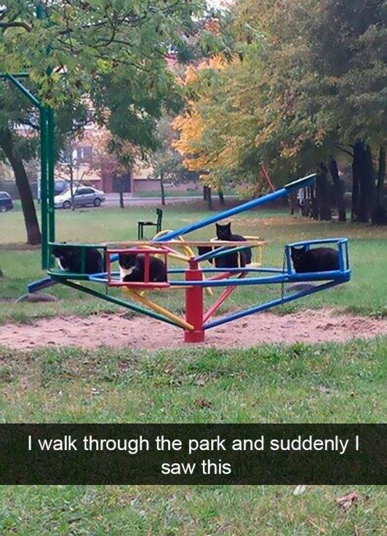 Šel jsem parkem a spatřil jsem tohle
