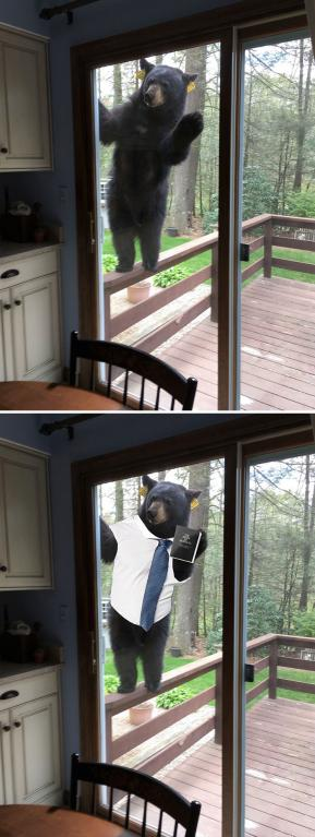 Tenhle vlezlý medvěd
