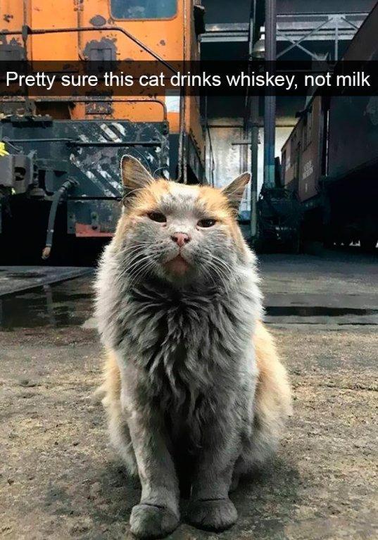 Tahle kočka určitě nepije mléko ale whisky