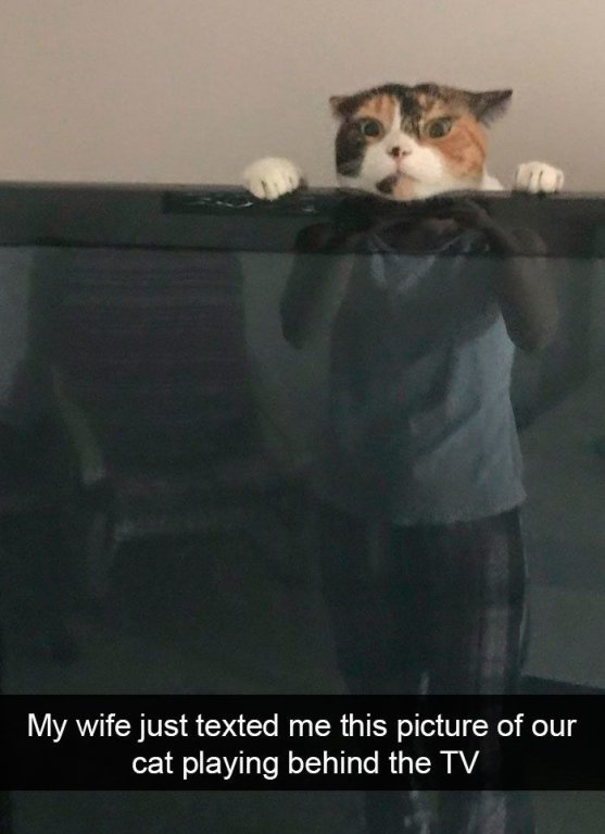 Moje žena mi právě poslala fotku tvojí kočky, jak si hraje za televizí