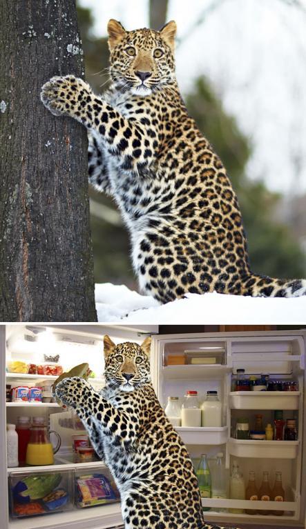 Provinilý leopard