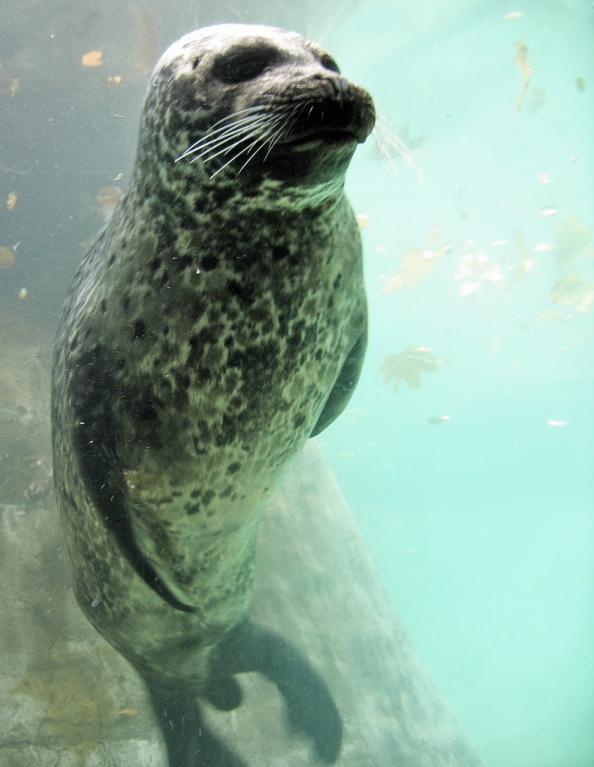 Tuleň tváří v tvář