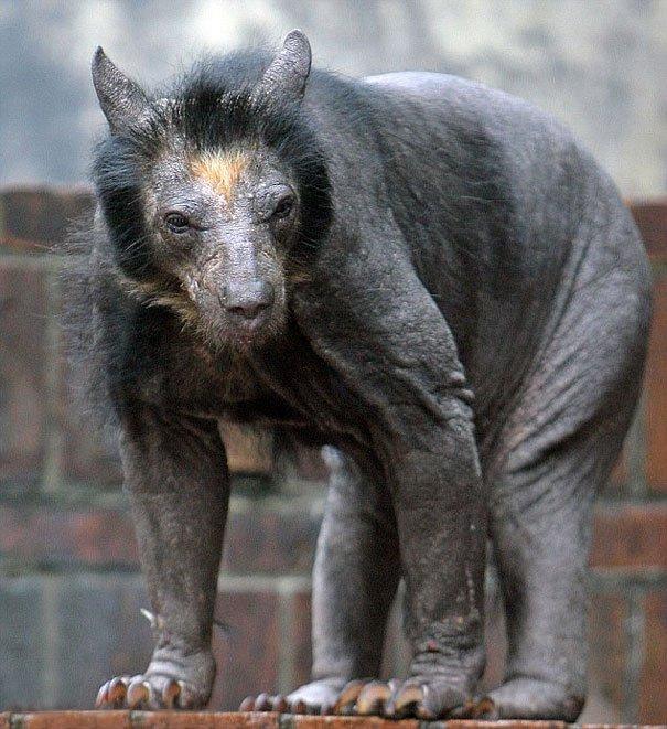 Medvědice bez srsti vypadá rozhodně děsivě. Trpí genetickou poruchou a žije v ZOO Leipzig