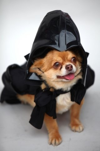 Čivava Harvey jako Darth Vader z Hvězdných válek