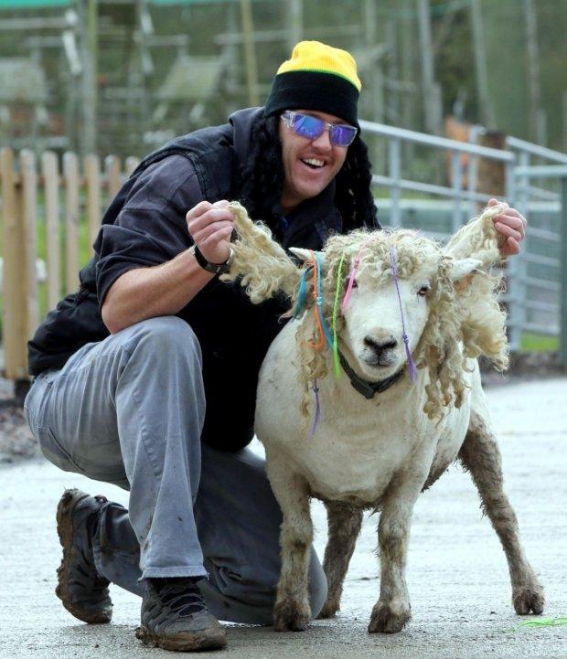 Ovce postavila svoji kariéru na porostu hlavy z ovčí vlny hodně připomínajícím slavný rasta účes legendárního zpěváka reggae Boba Marleyho.