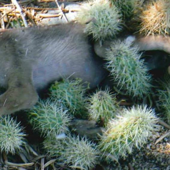 Kojot v nesnázích 1