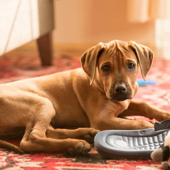Jak připravit dům na psa?