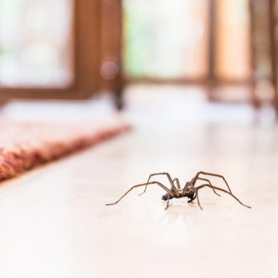 Muž za´bil šestiměsíční dítě kvůli pavoukovi