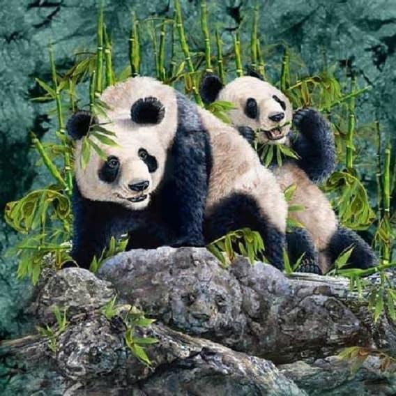 Optická hádanka - schované pandy 1