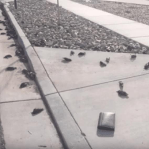 Stovky mrtvých ptáků spadlých z nebe
