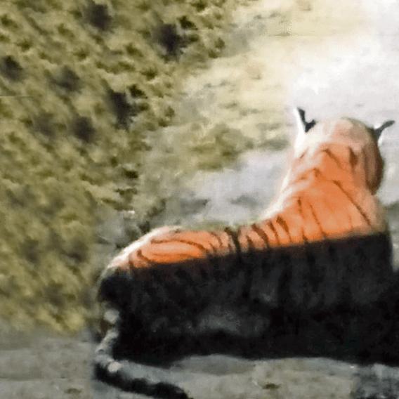 Farmáře vyděsil plyšový tygr 2