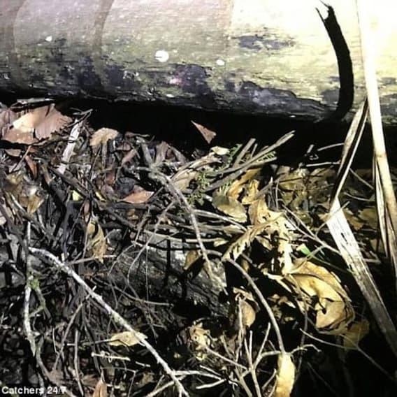 Ukrytý had v listí. 1