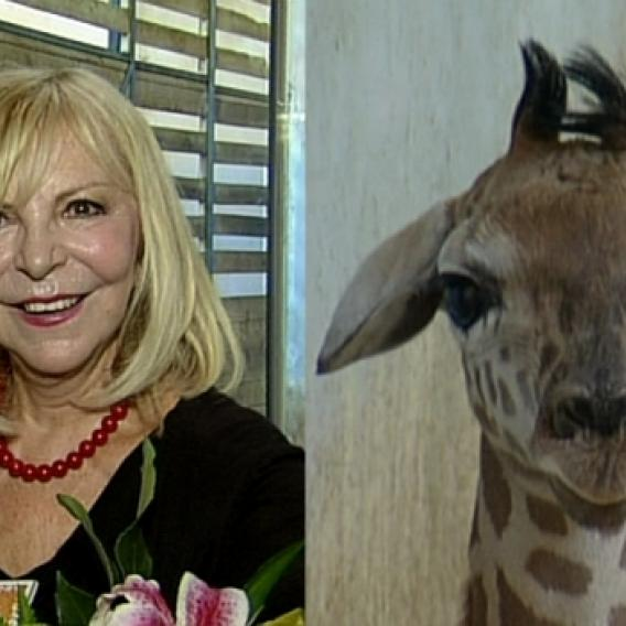 Video VIP zprávy: Hana Zagorová a malá žirafka Amálka