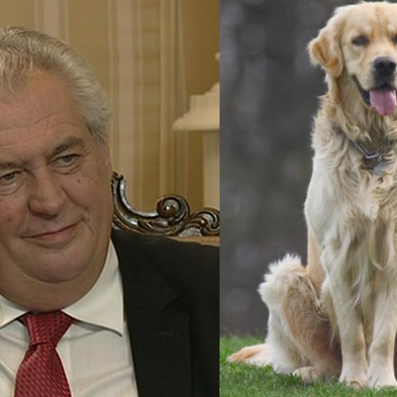 Video VIP zprávy: Prezident Zeman má trable se psem