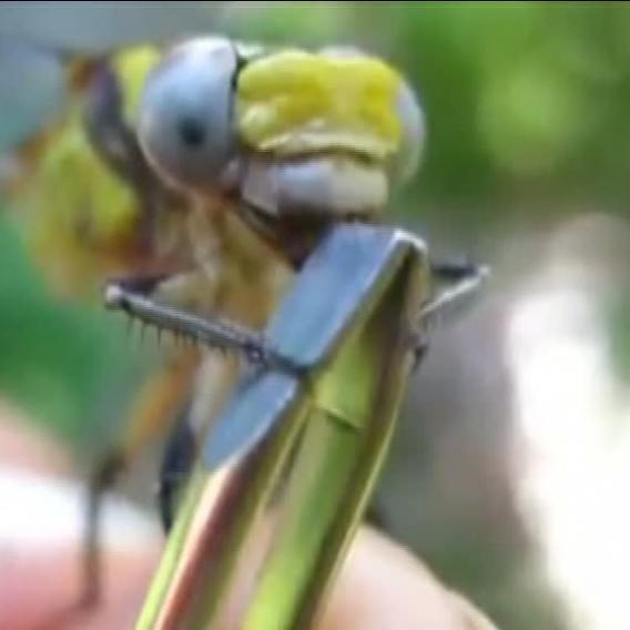 Video Divácké zprávy: Podívejte se, jak se taky dá nakrmit vážka!