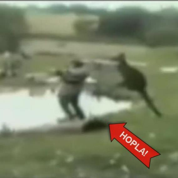 Video Divácké zprávy: Klokan je šprýmař