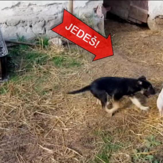 Video Divácké zprávy: Nellynka zahání selátka