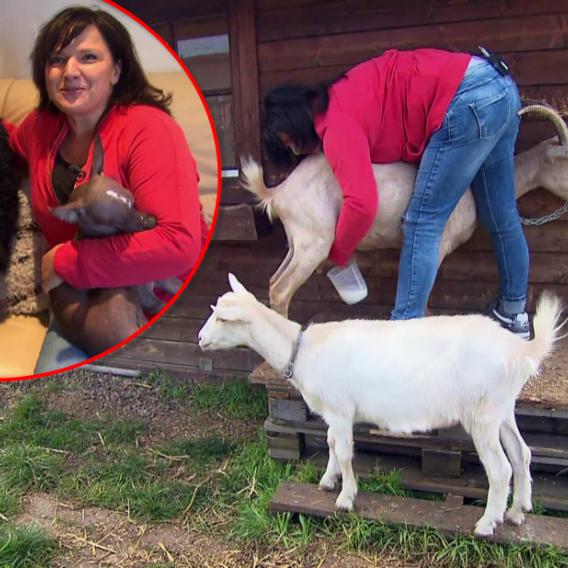 Video VIP zprávy: Šárka Rezková si po tragické smrti svého manžela pořídila nového partnera - a kozy!