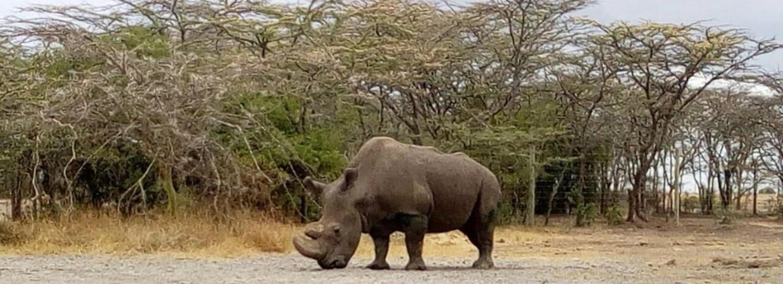 Nosorožec Sudán je posledním samcem svého druhu