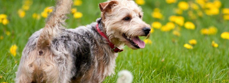 Chraňte psa před boreliózou: Když se klíště nepřisaje, nenakazí!