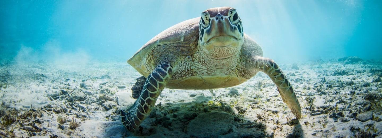 Jak želvy dýchají?