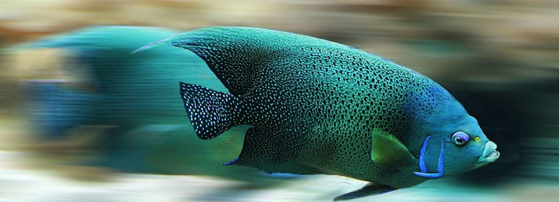 """Ryby se v """"ropném opojení"""" chovají divně"""