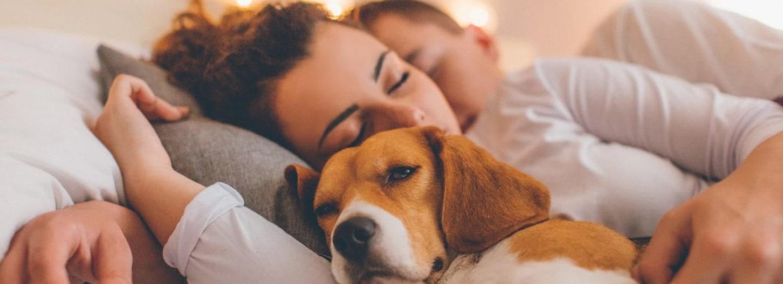 Jak psi ovlivňují náš spánek?