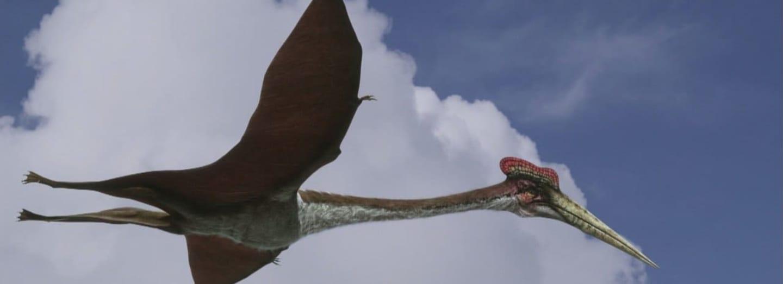 Quetzalcoatlus měl rozpětí 15 metrů a připomínal létající žirafu