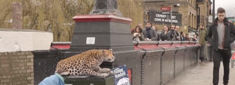 leopard prank