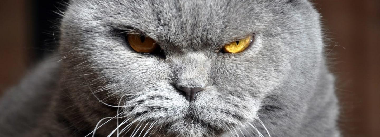 Mají kočky vliv na zdraví dětí?