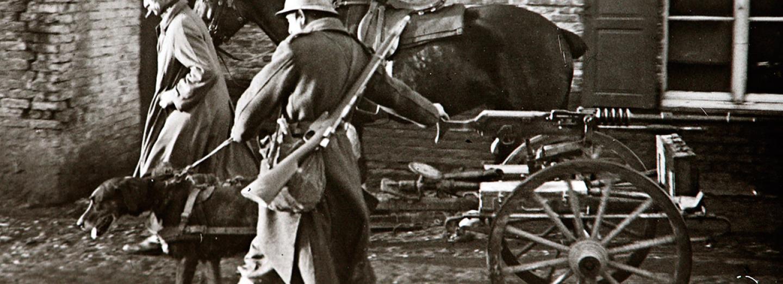 Psi se využívali za první světové války k vyhledávání raněných i jako tažná zvířata