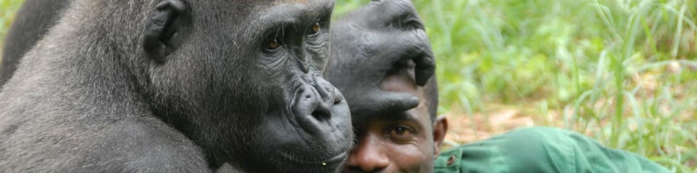 Po stopách ztracených goril