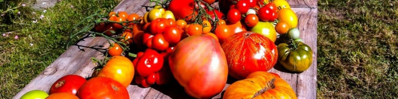 Pravda o rajčatech