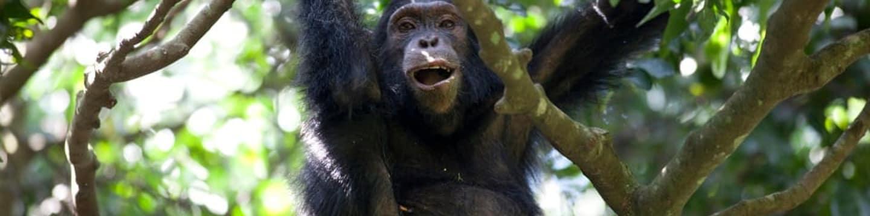 Šimpanzi ze ztraceného kaňonu