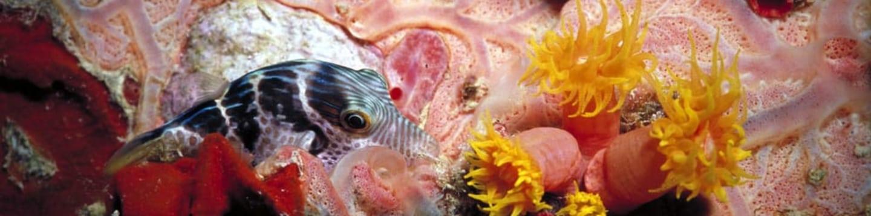 Podmořská řeč barev