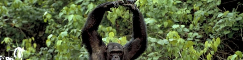 David Attenborough: Život savců