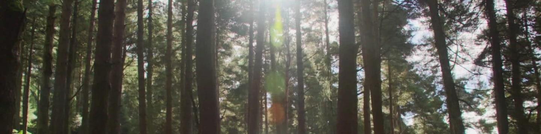 Tajemný svět stromů (1) - upoutávka