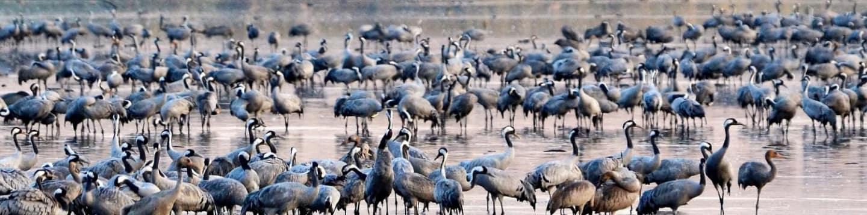Krásy divokého Izraele