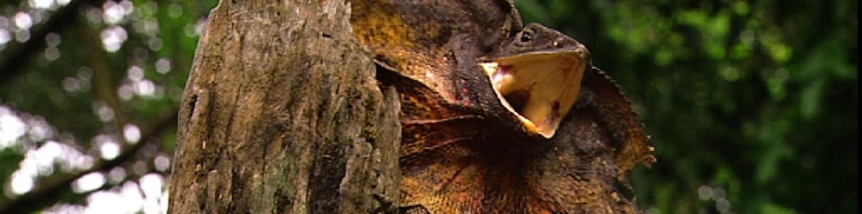 Austrálie: Cesta evolucí