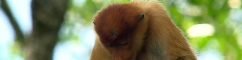 Krásy divoké Indonésie (1)
