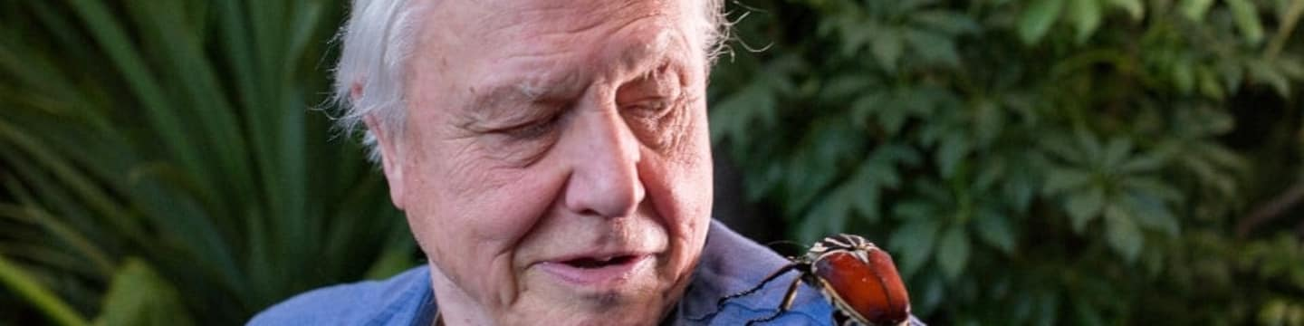 David Attenborough: Mikro monstra