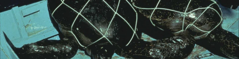 Dávní mořeplavci: Příběh mořské želvy