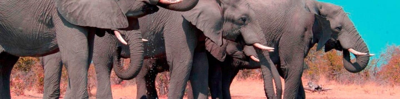 Dvojí život slonů