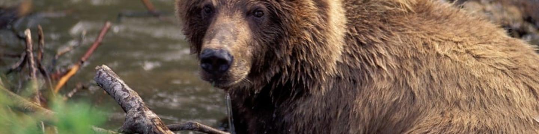 Grizzly: V dobrém i ve zlém