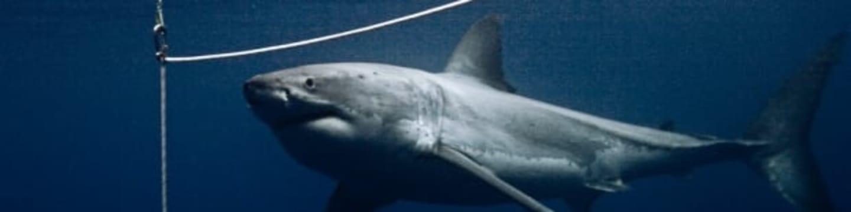Žraloci po setmění