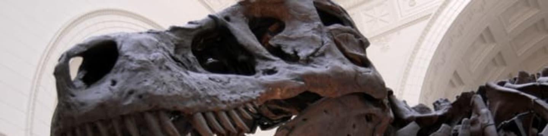 Potomci dinosaurů