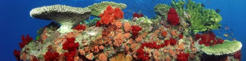 Tajemství Velkého korálového útesu